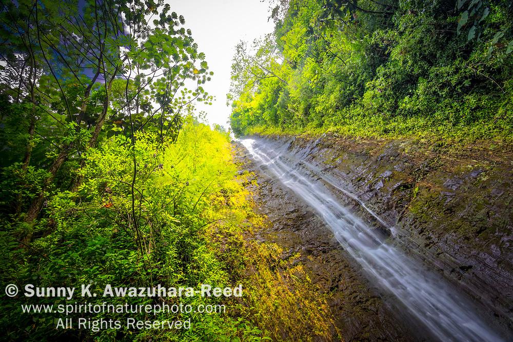 Looking up of Manoa Falls with tropical vegetation. Honolulu, Oahu Island, Hawaii.