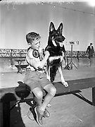 Mater Rodney Ross, son of Mr R Ross, Queen St., Ballymoney, with Mr W Murphy's German Shepherd Dog 'Koleen of Wolfhill' at Bray Dog Show (Winner best in show).16/08/1952