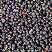 June 25, 2018. An assortment of picked blueberries from the Fred + lll  blueberry farm in Pemberton, New Jersey. John Taggart for The New York Times