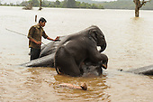 Baby elephant plays with mum at an elephant spa in India