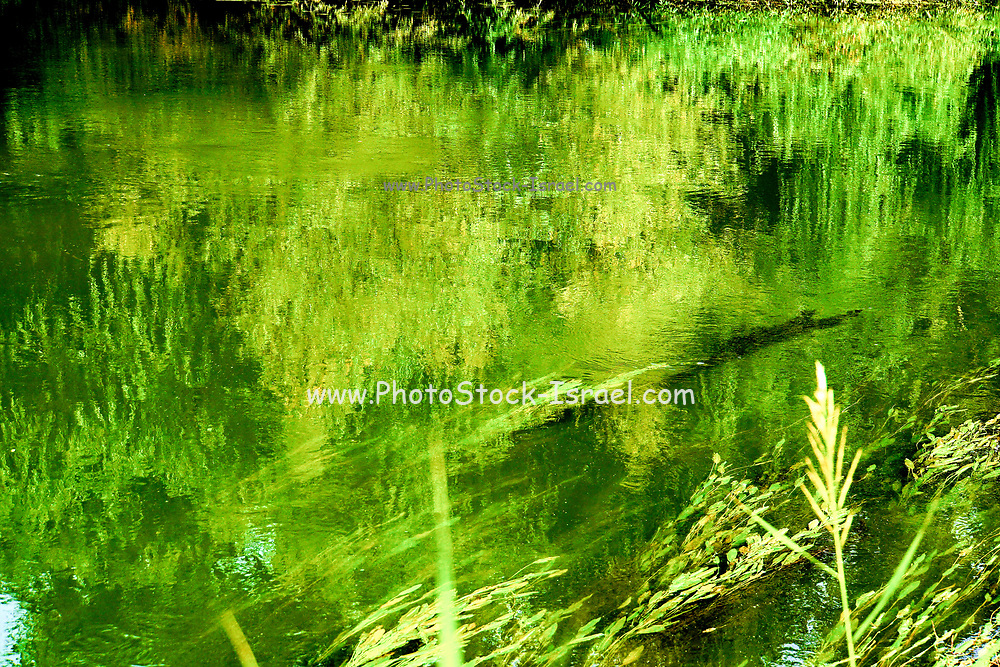 trees bushes and weeds, on the river bank reflect in the rippling water of the river