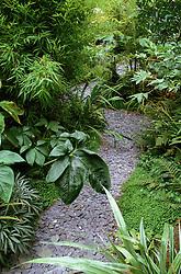 Slate path leading through exotic foliage of Astelia chathamica 'Silver Sword', bamboo, Soleirolia soleirolii, arisaema, fatsia & ferns in Declan Buckley's garden, London