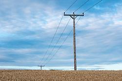 Power lines, West Kyloe, Northumberland, England, UK<br /> Photo: Ed Maynard<br /> 07976 239803<br /> www.edmaynard.com
