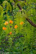 June Blake's Garden, Ireland, May
