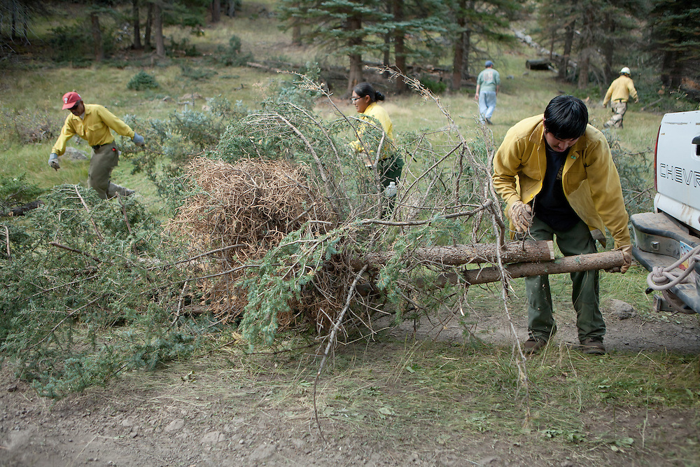 A worker attaches a newly removed tree in the Valles Caldera to a truck for transportation. Santa Clara Pueblo has received $6,513,000 in stimulus funds to promote healthy forests and reduce hazardous fuels.