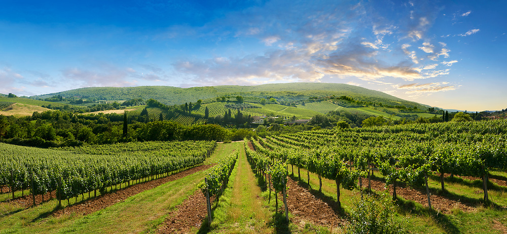 Chianti vineyards and vines of San Gimignano at sunrise, Tuscany Italy