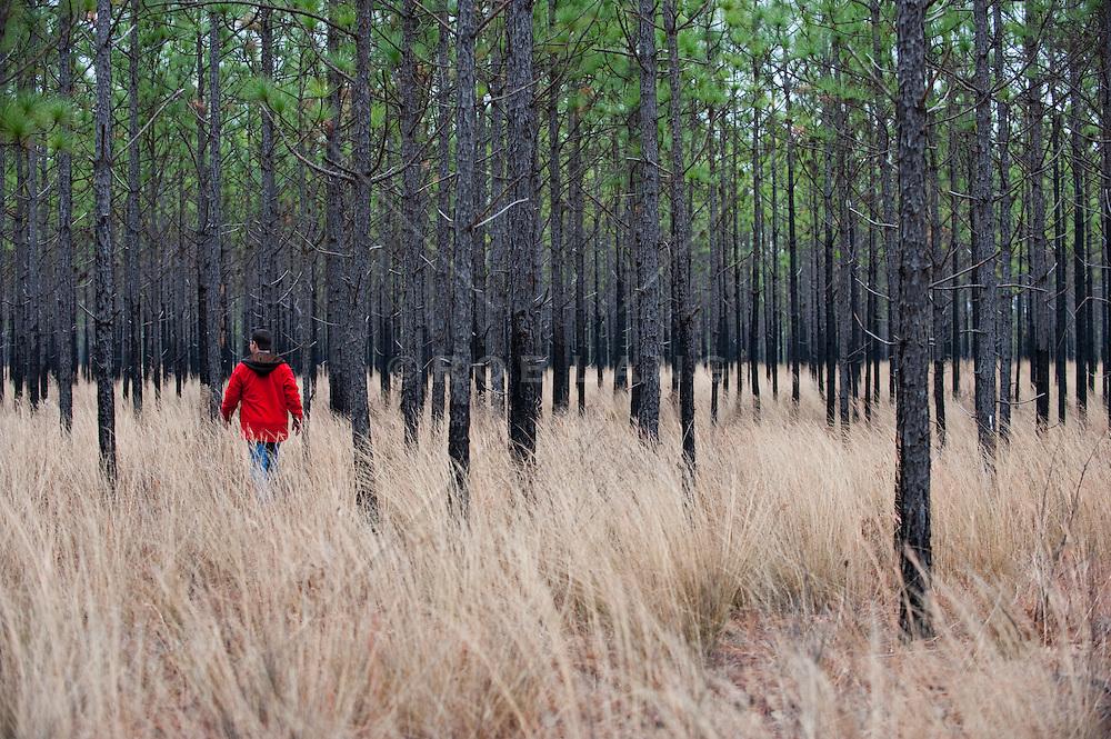 Man Walking Through  A Pine Forest In South Carolina