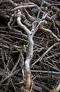 Gnarled roots from fallen trees are seen along Lemhi River during a property tour on Wednesday, Aug. 10, 2016, in Salmon, Idaho. (© 2016 Cindi Christie)