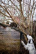 """English Setter """"Rudy"""" am 17.12. 2017 in einem Dialog mit einer Katze im Garten.  Rudy wurde Anfang Januar 2017 geboren und ist gerade zu seiner neuen Familie umgezogen."""