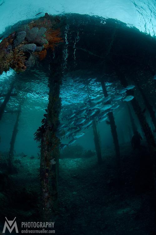 Dive Spot: Airborek Jetty