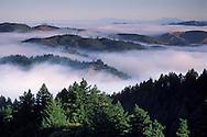 Coastal fog in morning over rolling hills near Mount Tamalpais State Park, Marin County, California Coastal fog in morning and trees on the forest hillsides and ridges of Mount Tamalpais State Park, Marin California