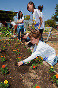 Students, parents and teachers work on the garden at the 24th Street School garden on Big Sunday, the largest annual citywide community service event in America, West Adams, Los Angeles, California, USA