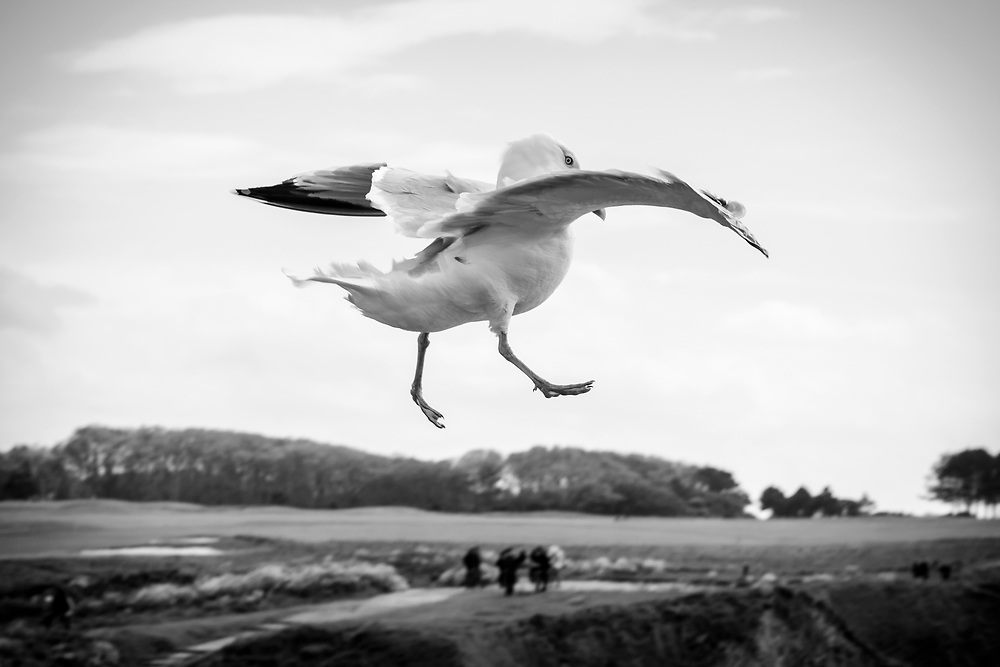A seagull flies in a brisk wind in Étretat, France