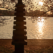 A small stone pagoda sits amonst the blooming cherry blossoms next to the Tidal Basin in Washington. It was given as a gift from the people fo Japan in 1957 to celebrate US-Japanese relations.