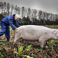 Nederland. Uden. 31 oktober 2003..Schrijver Voskuil checkt de hammen van een  varken  van Biologische varkensboerderij Hans en Anja Donkers. Founder of Pigs in Peril writer Voskuil is checking the hams of a organic happy pig.