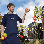 """FREE PICTURES :  Fergus Walker from Helping Britain Blossom with some variety of apples in the orchard.<br /> <br /> Fergus said, """"Glasgow's apple heritage comes alive at Glasgow Apple Sunday, which empowers people to make the most of their harvest while reviving the Clyde Valley orchard tradition"""".<br /> <br /> <br /> Scotland's heritage apple varieties will be ripe for tasting at this year's Apple Day celebration on Sunday 22nd October (12-5pm) at Townhead Village Hall & Orchard, Glasgow, a hidden gem in the centre of the city. <br /> One of a number of Apple Day events supported by Helping Britain Blossom* across Glasgow and surrounding areas, the Townhead Village Hall event will showcase traditional Clyde Valley varieties such as Clydeside, Cambusnethan Pippin and Scotch Bridget which are no longer widely available in supermarkets and food outlets in the city. <br /> <br /> Picture Robert Perry 22nd April 2017<br /> <br /> Please credit photo to Robert Perry<br /> <br /> Image is free to use in connection with the promotion of the above company or organisation. 'Permissions for ALL other uses need to be sought and payment make be required.<br /> <br /> <br /> Note to Editors:  This image is free to be used editorially in the promotion of the above company or organisation.  Without prejudice ALL other licences without prior consent will be deemed a breach of copyright under the 1988. Copyright Design and Patents Act  and will be subject to payment or legal action, where appropriate.<br /> www.robertperry.co.uk<br /> NB -This image is not to be distributed without the prior consent of the copyright holder.<br /> in using this image you agree to abide by terms and conditions as stated in this caption.<br /> All monies payable to Robert Perry<br /> <br /> (PLEASE DO NOT REMOVE THIS CAPTION)<br /> This image is intended for Editorial use (e.g. news). Any commercial or promotional use requires additional clearance. <br /> Copyright 2016 All rights protected.<br /> fir"""