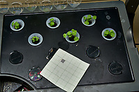 AeroGarden Farm 08-Right. Positions 01-12 Broccoli Raab. Image taken with a Leica TL-2 camera and 35 mm f/1.4 lens (ISO 125, 35 mm, f/8, 1/30 sec).