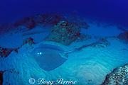 leopard ray, coachwhip ray, or honeycomb stingray, Himantura uarnak, loggerhead turtle and guitarfish in back, Manta Bommie, N. Stradbroke Island, near Brisbane, Queensland, Australia ( Western Pacific Ocean )