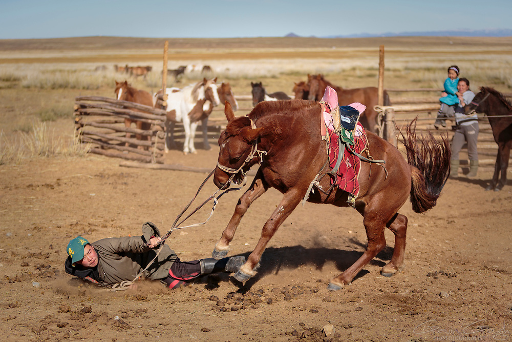 The Mongolian nomads are expert horsemen but breaking-in a wild horse can sometimes be a painful process.