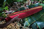 Pandanus palm fruit<br /> Dani tribe man<br /> Budaya village<br /> Suroba<br /> Trikora Mountains<br /> West Papua<br /> Indonesia