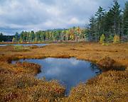 Bog along the shore of Duck Pond, Adirondack Park, New York.