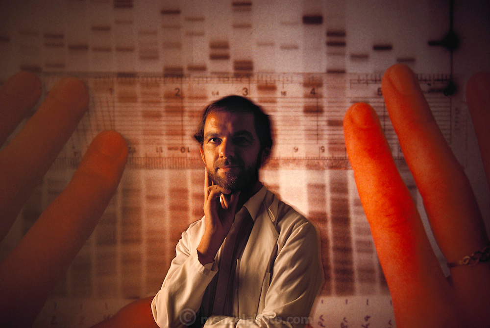 (1992) Professor Alec Jeffreys (b. 1950), English molecular biologist and discoverer of DNA fingerprinting. In the background is an image of an autoradiogram, the visualization technique used to compare DNA samples. A DNA fingerprint is a unique genetic sequence, which identifies any individual, human or animal, from a tiny sample of tissue such as blood, hair, or sperm. Its many uses include the identification and conviction of criminals, and the proving of family relationships, such as the paternity of a child. Only monozygotic 'identical' twins share the same DNA. DNA consists of two sugar- phosphate backbones, arranged in a double helix, linked by nucleotide bases. There are 4 types of base; adenine (A), cytosine (C), guanine (G) and thymine (T). Sequences of these bases make up genes, which encode an organism's genetic information. The bands (black) on the autoradiogram show the sequence of bases in a sample of DNA. Jeffreys is a professor in the Department of Genetics at the University of Leicester, England. DNA Fingerprinting. MODEL RELEASED