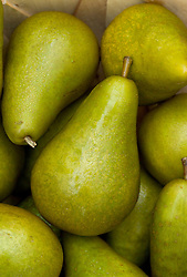 Pear 'Conference' - Pyrus