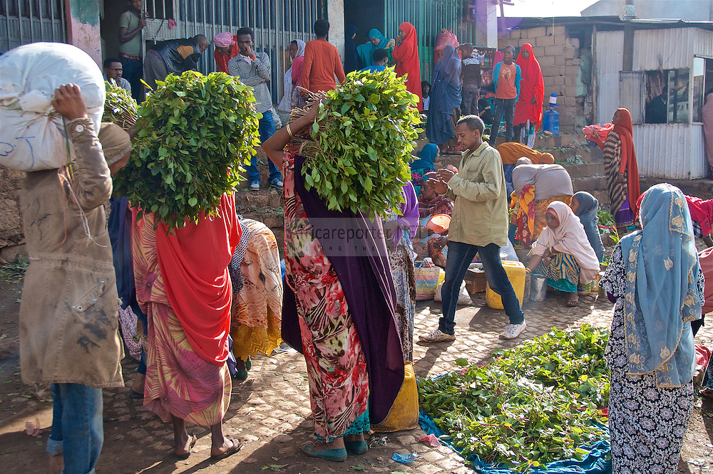 The selling of khat (qat, miraa, kwatt) at the old city of Harar, Ethiopia. Trade continues 24/7 as the wealth of the region is built on these leaves. In #Ethiopia places outside the home where people can come to buy and chew khat are called Makamiya Betoch. This is where folks gather in social groups, along with bundles of khat and settle in for an afternoon of chatter, contemplation and watching soccer on TV. Recently, Khat has even been blamed for funding #errorism. Whatever your opinion is of Khat the drug, the fact is this is a multi-million dollar industry and a cash crop that keeps on giving for many peasants who grow it in the Horn of Africa,