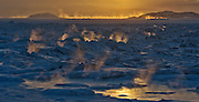 Investigative report on food  in Iqaluit, Nunavut on Monday, December 9, 2014. THE CANADIAN PRESS/Sean Kilpatrick