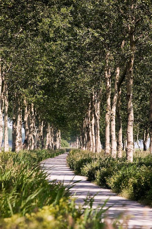 Nederland, flevopolder omg. zeewolde, 8 juni   2006..Mooi bomenlaantje in de polder.landschap, fietspad.bomen, laantje..Foto (c) Michiel Wijnbergh..