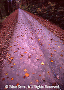 Road with fall leaves winds through Allegheny National Forest, Warren Co., PA