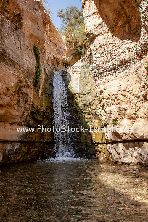 Ein Gedi national park. The Hidden Waterfall in Wadi Arugot [Arugot Stream]. The Arugot Stream is one of the only two streams at the center of the Judean Desert in which water flows all year round. It is a unique nature reserve that combines sweet water with the arid desert. The Source is the Hebron Mountains ending up in Dead Sea, Israel