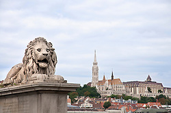 Lion Sculpure of Chainbridge over Danube River with Fishermans Bastion, Budapest, Hungary