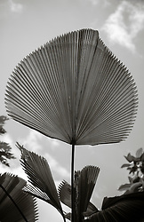 palm leaf against the sky in Florida