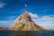 Seagulls in flight with Gnalberget in the background, Hornsund, Svalbard.