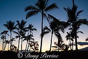 coconut palms and Mauna Kea at sunrise, as seen from Kukio resort area, Kona Coast, Hawaii Island ( the Big Island ), Hawaiian Islands ( Central Pacific Ocean )