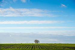 Field and sky, Stoughton, Leicestershire, England, UK.<br /> Photo: Ed Maynard<br /> 07976 239803<br /> www.edmaynard.com