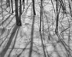 Elms and Snow Reflection, Pound Ridge, New York