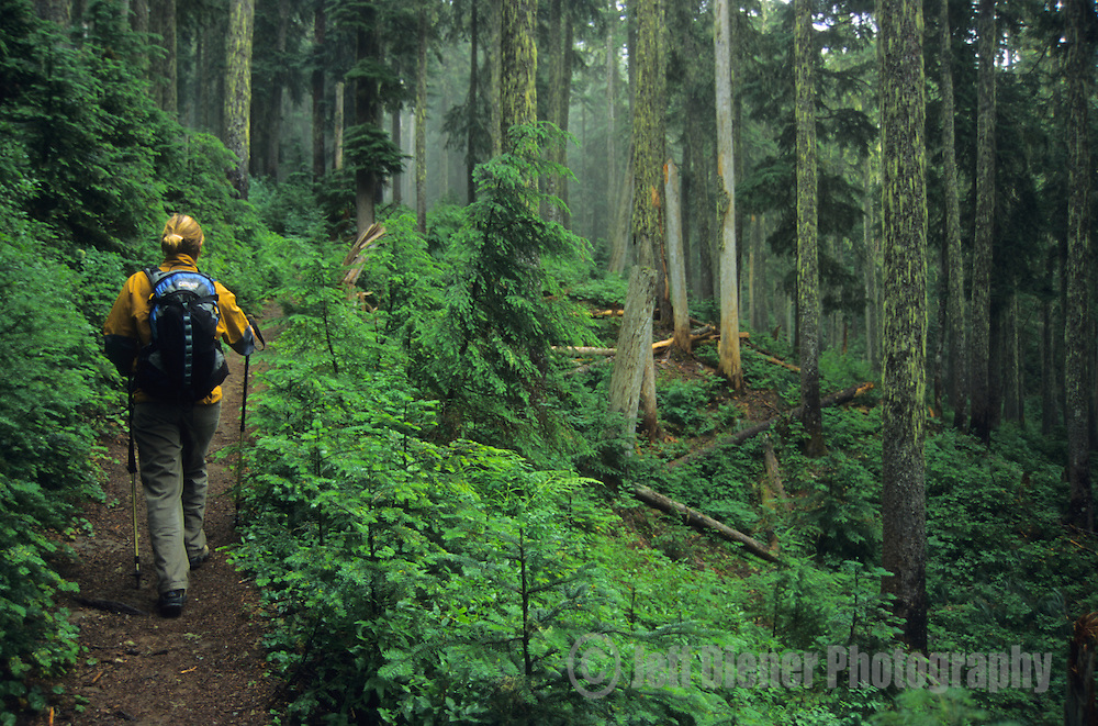 A young woman hikes through old growth forest in the Tatoosh Range.  Mount Rainier National Park, Washington.