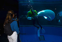 Beluga whales, walrus, otter, lionfish, common dolphins and marine life in the Yokohama, Japan, aquarium