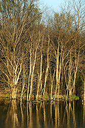 09 April 2005<br /> <br /> Comlara Park, McLean County, Il<br /> Trees at waters edge reflecting in lakes water