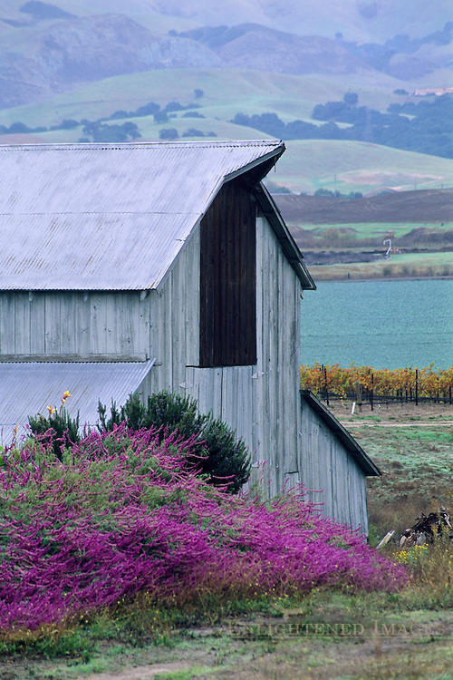 Barn at Tobin Kynsi Winery, Edna Valley, San Luis Obispo County, California