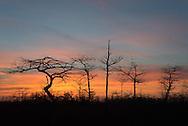 Evening descends upon Big Cypress National Preserve near the Gator Hook Strand off of Loop Road, Ochopee, FL