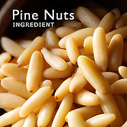 Pine Nuts Pictures   Pine Nuts Photos Images & Fotos