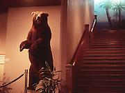 American Museum of Natural History Brown Bear.