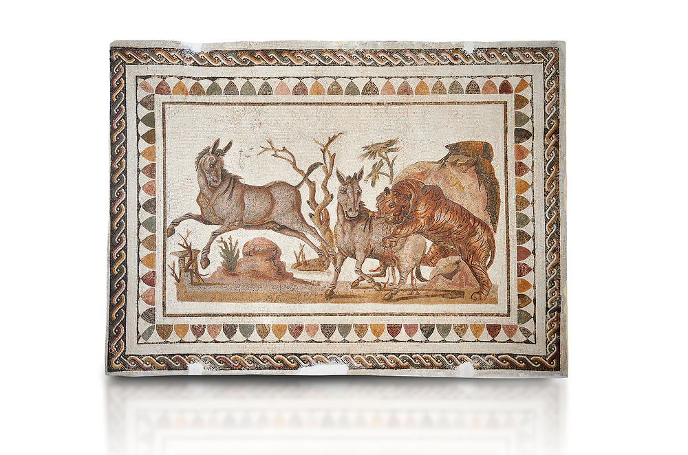 Picture of a Roman mosaics design depicting a lion attacking two onagers or Asiatic wild ass, from the ancient Roman city of Thysdrus. 3rd century AD. El Djem Archaeological Museum, El Djem, Tunisia. Against a white background .<br /> <br /> If you prefer to buy from our ALAMY PHOTO LIBRARY Collection visit : https://www.alamy.com/portfolio/paul-williams-funkystock/roman-mosaic.html . Type - El Djem - into the LOWER SEARCH WITHIN GALLERY box. Refine search by adding background colour, place, museum etc<br /> <br /> Visit our ROMAN MOSAIC PHOTO COLLECTIONS for more photos to download as wall art prints https://funkystock.photoshelter.com/gallery-collection/Roman-Mosaics-Art-Pictures-Images/C0000LcfNel7FpLI
