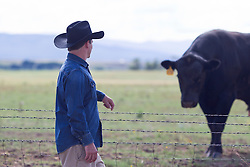 cowboy standing in front of a large bull