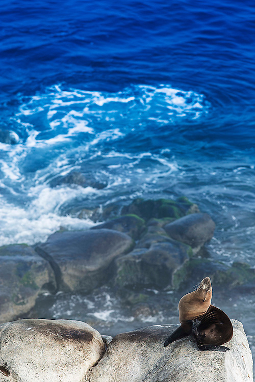 seal sunning in San Diego