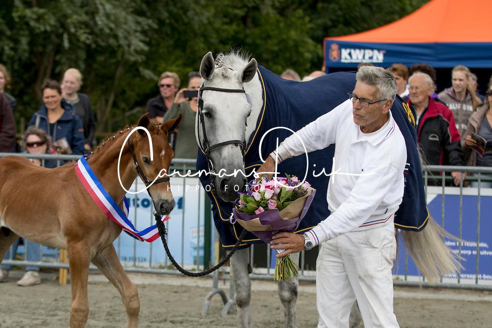 Liverno<br /> Zeeuws fokker van het jaar<br /> Centrale Keuring Zeeland - Vrouwenpolder 2016<br /> © Hippo Foto - Dirk Caremans<br /> 02/07/16