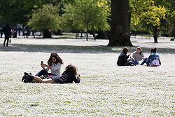 © Licensed to London News Pictures. 14/05/2014. London, UK. People enjoying the sunshine and good weather amongst a bed of dasies in Regents Park in London on 14th May 2014. Photo credit : Vickie Flores/LNP
